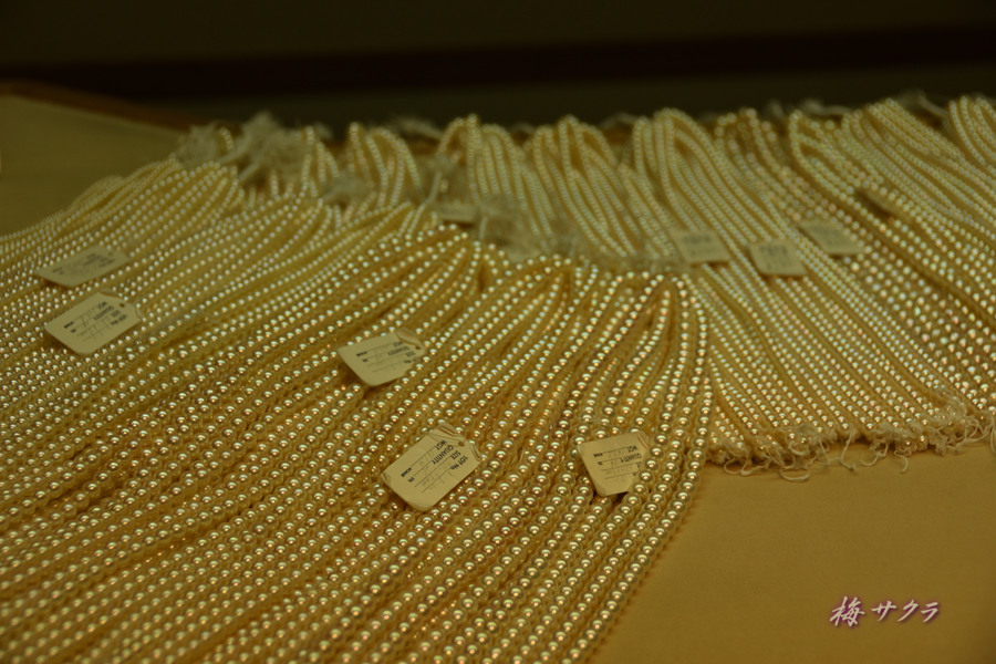 真珠博物館6変更済