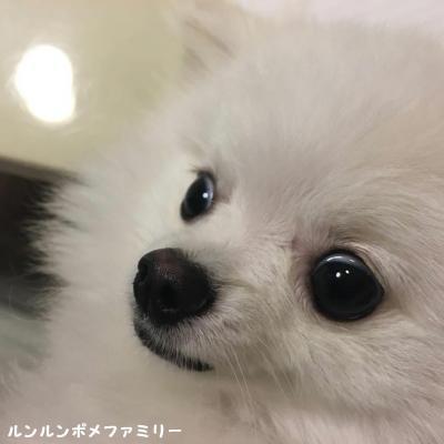 米太郎 お目目クリクリ
