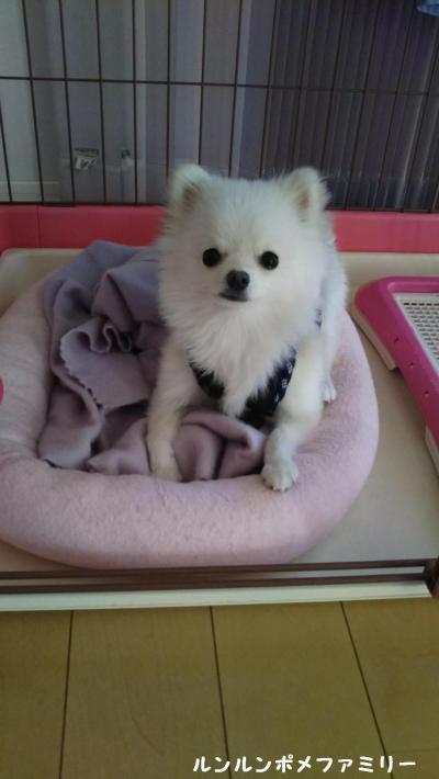 米太郎 ベッドおはよう