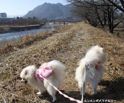 依田川上流