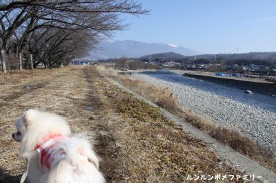 依田川下流