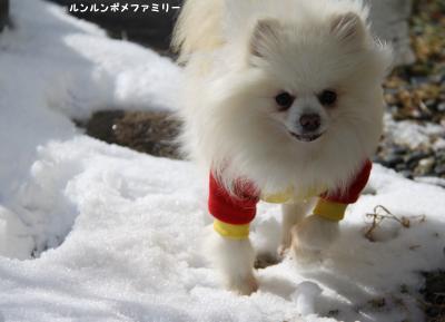 瑠妃 雪の上を歩く