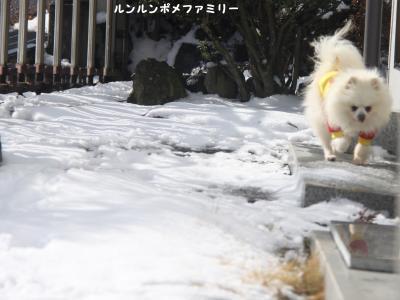 瑠妃 雪のない所歩く