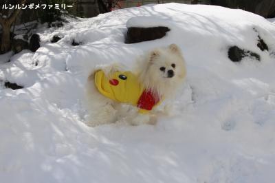 利温 雪遊び笑顔①
