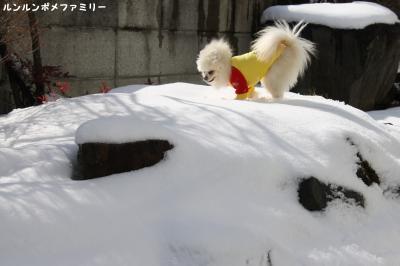 瑠妃 雪山新雪