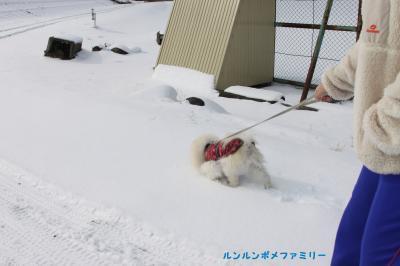 利温 新雪を歩く