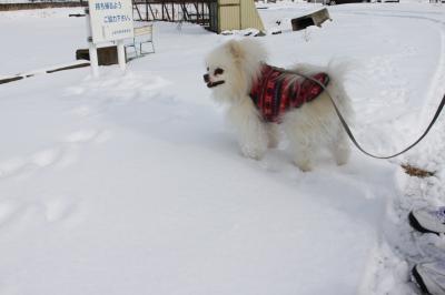 利温 新雪楽しい