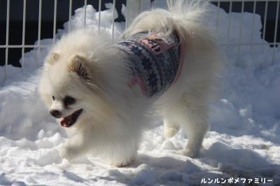 利温 雪の上