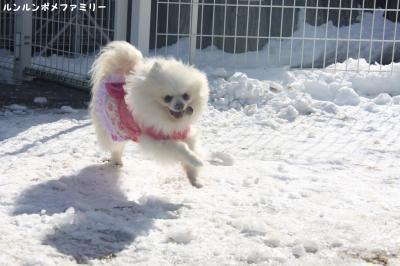 瑠妃 雪の上かけっこ