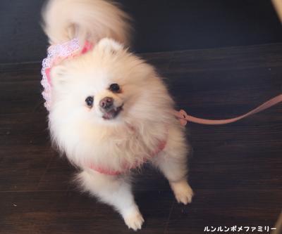 ブンブン瑠妃