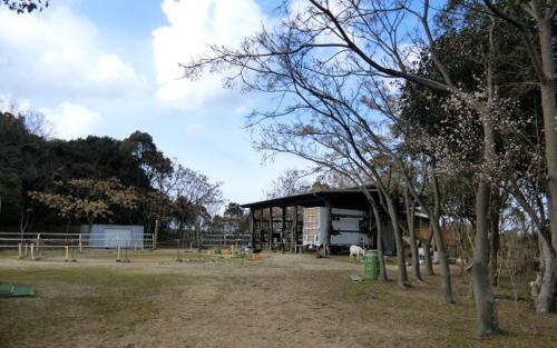 umatoyagi180212-1