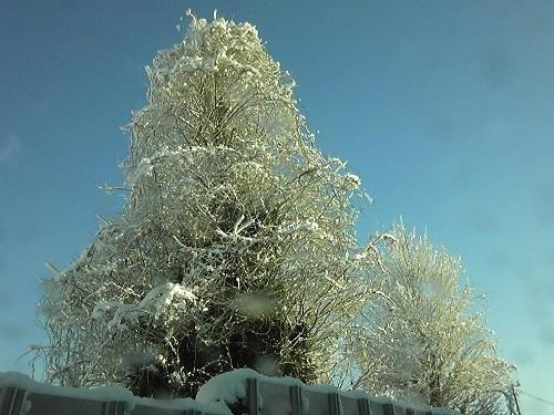 大雪180114-1