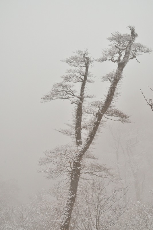 171220英彦山 (16)