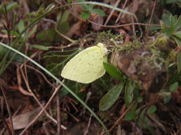 越冬中の蝶