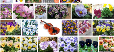 flowerMotif166-09.jpg
