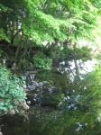水屋神社-湧玉池08