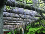水屋神社-湧玉池11