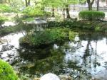 桜の馬場-鉾立石11