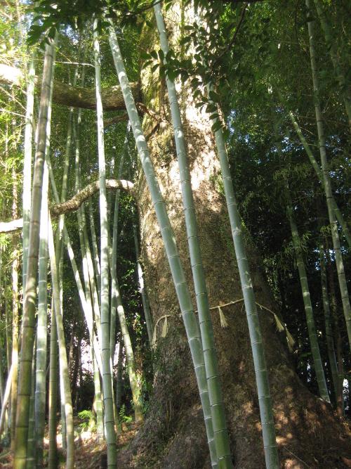 相賀神社13