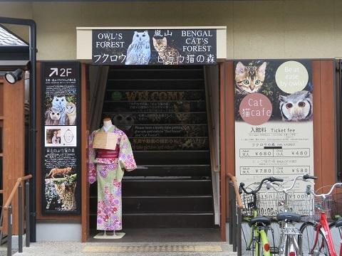 170506_ふくろうとヒョウ猫2