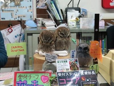 171119_富士花鳥園39