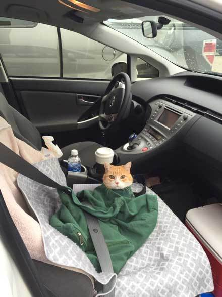 Anne-Richies-cat-Moving-IA-toFL