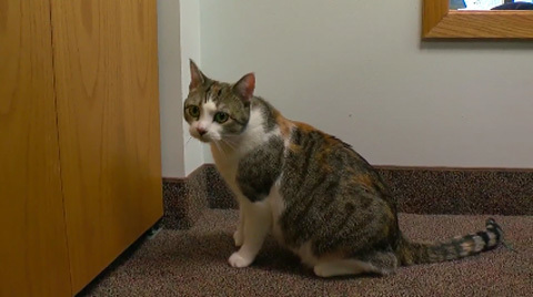 paws28toedcat2