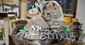 クリスマスキャンペーンのおしらせ!
