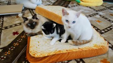 パン猫! 2