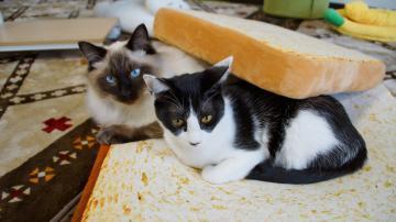パン猫! 1