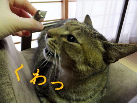 三ニャン4