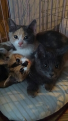 IMG_7792 保護猫