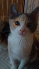 IMG_7789 保護猫