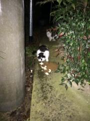 IMG_0909 地域猫