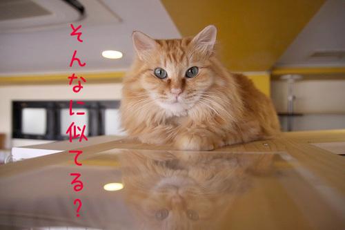 キンちゃん20180222