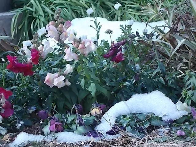 東京ならではの雪①DSCN0611