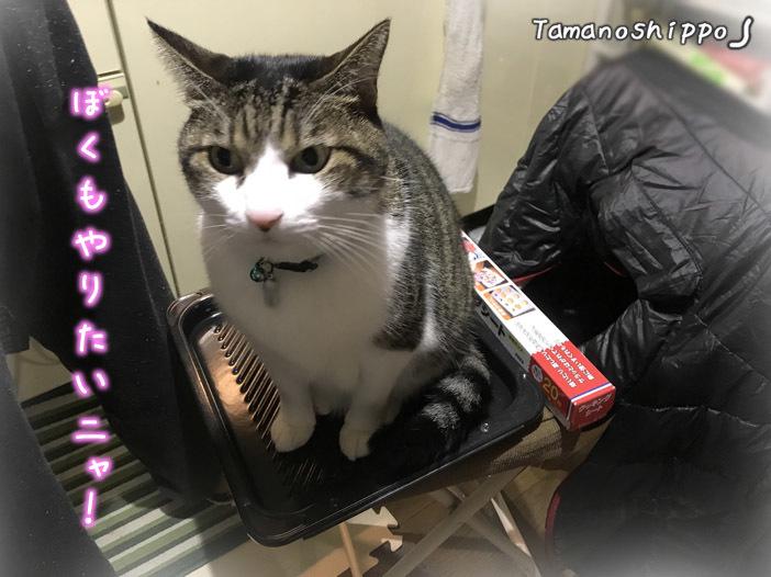 オーブンの角皿の上に乗る猫(ちび)お手伝いしてるつもりらしい