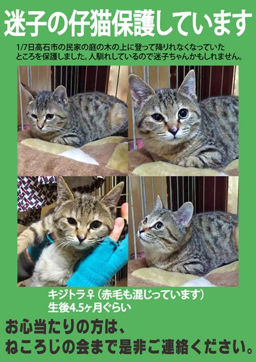 迷子猫・キジトラ・高石市