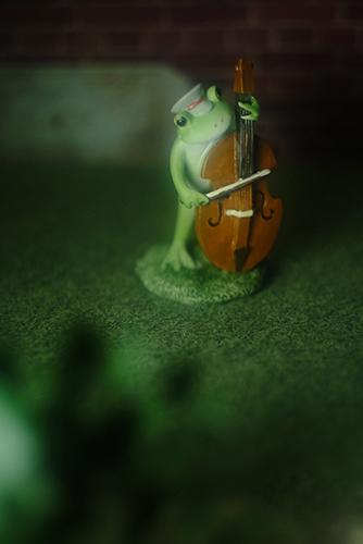 ツバキアキラが撮ったカエルのコポー。夜の庭でコントラバスの練習。