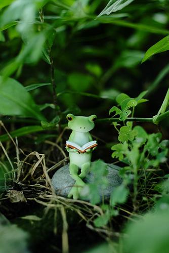 ツバキアキラが撮ったカエルのコポー。外で本を読むコポタロウ。