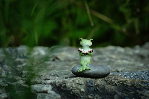 ツバキアキラが撮ったカエルのコポー。石の上で本を読むコポタロウ。