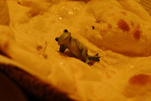 ツバキアキラが撮ったカエルのコポー。ナンの上に寝転がるコポタロウ。
