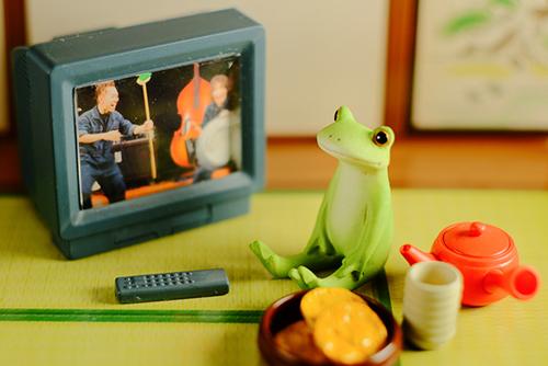 ツバキアキラが撮ったカエルのコポー。TVを観ているコポタロウ。