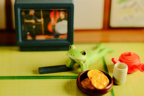 ツバキアキラが撮ったカエルのコポー。寝転がって、TVを観ているのか観ていないのか、わからないコポタロウ。