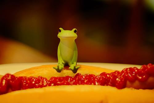 ツバキアキラが撮ったカエルのコポー。ケチャップがたっぷりかかった、ジャーマンドッグの上に座るコポタロウ。