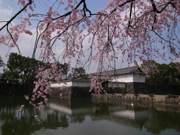 20180206 皇居の桜