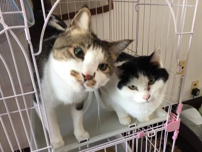 くるめ猫部屋 お兄ちゃん&コクン