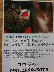 ミスターブラウンを探しています