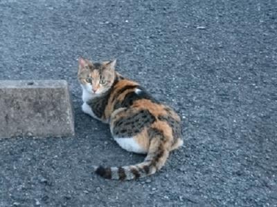 DSC_0960三毛猫