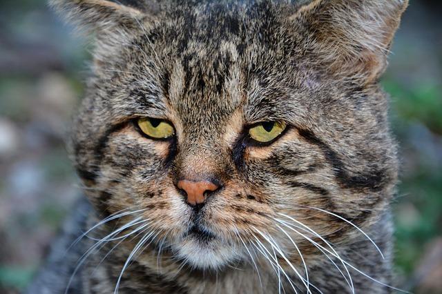 ジト目の猫